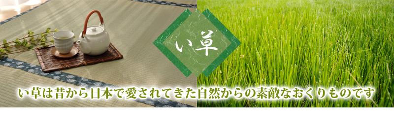 い草は昔から日本で愛されてきた自然からの素敵な贈りものです。