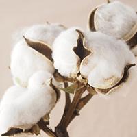 綿・綿混素材